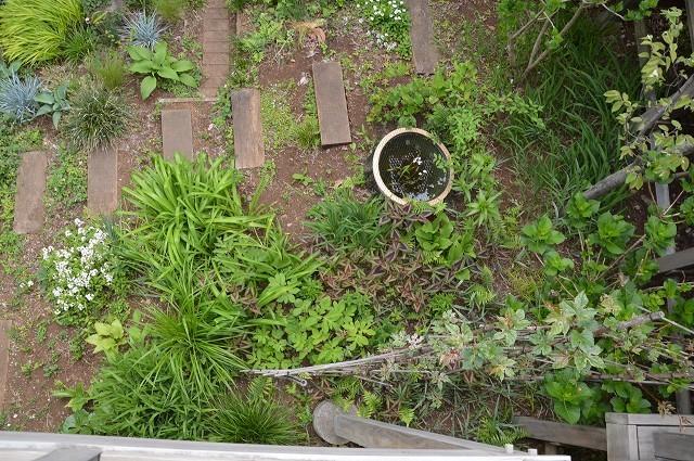 4月23・26日の庭。_c0124100_15224460.jpg
