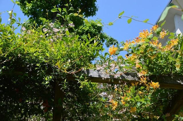 日差しが強くなってきた…5月4・8日の庭。_c0124100_16541168.jpg