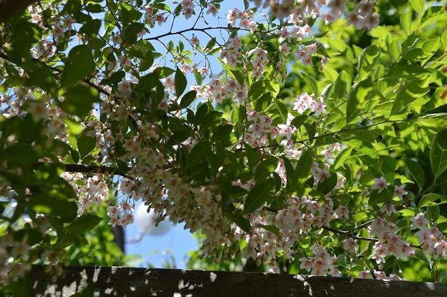 日差しが強くなってきた…5月4・8日の庭。_c0124100_16542377.jpg
