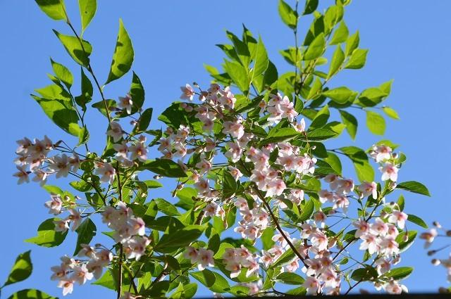 日差しが強くなってきた…5月4・8日の庭。_c0124100_16542839.jpg