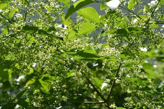 日差しが強くなってきた…5月4・8日の庭。_c0124100_16545291.jpg