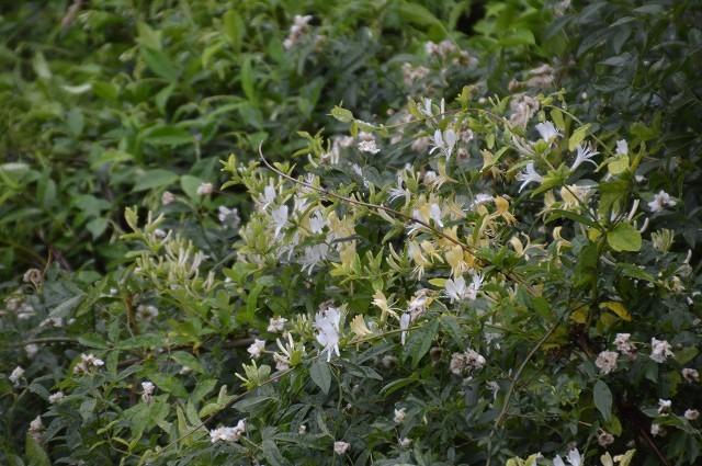 日差しが強くなってきた…5月4・8日の庭。_c0124100_16552791.jpg