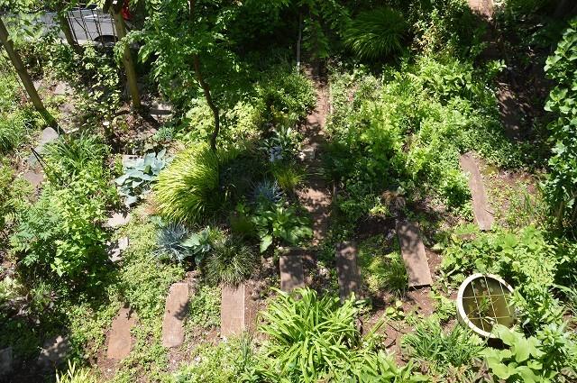 日差しが強くなってきた…5月4・8日の庭。_c0124100_16553565.jpg