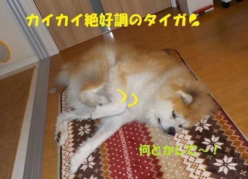 f0121712_09572787.jpg