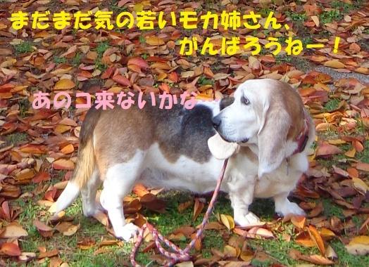 f0121712_10505431.jpg