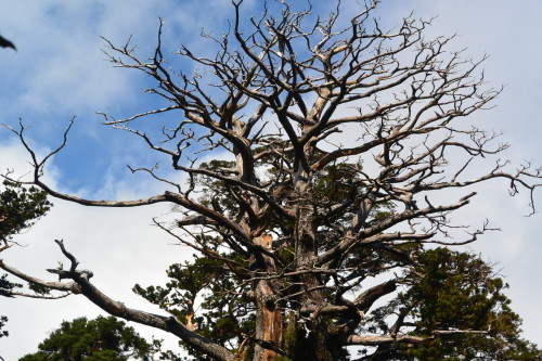 """2018年11月『世界遺産、屋久島』 November 2018 \""""Yakushima (Yaku-Island) - World Heritage- \""""_c0219616_21222964.jpg"""