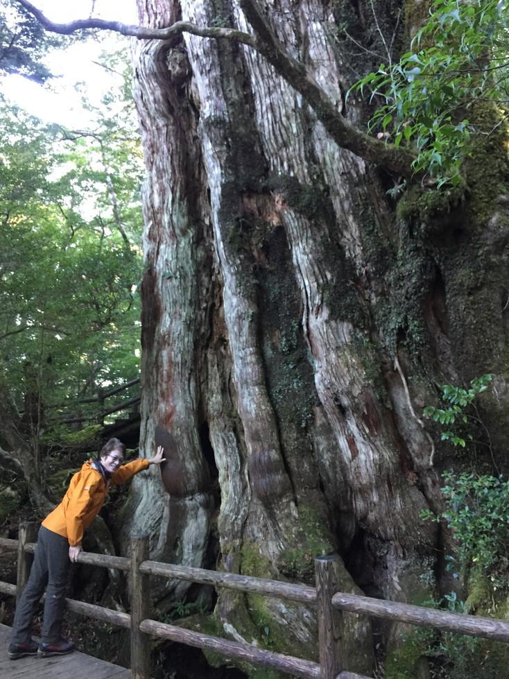 """2018年11月『世界遺産、屋久島』 November 2018 \""""Yakushima (Yaku-Island) - World Heritage- \""""_c0219616_21223074.jpg"""
