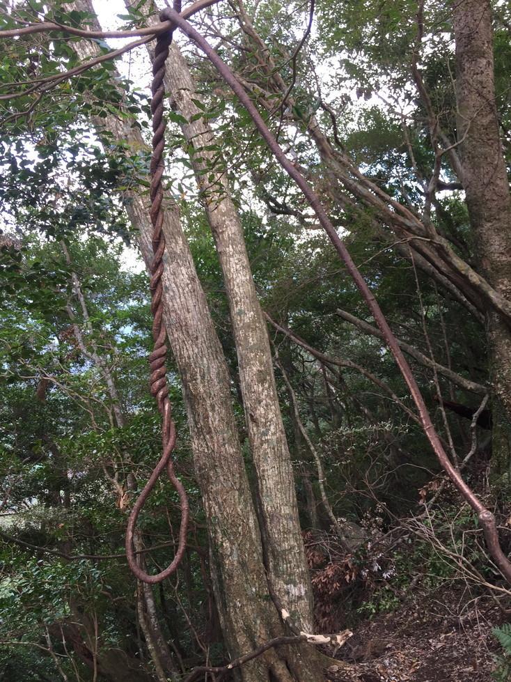 """2018年11月『世界遺産、屋久島』 November 2018 \""""Yakushima (Yaku-Island) - World Heritage- \""""_c0219616_21223158.jpg"""