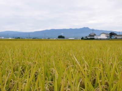 安全で美味しい熊本のお米を紹介!その1:惜しまぬ手間ひまの「七城米 長尾さんちのこだわりのお米」_a0254656_18123569.jpg