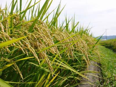 安全で美味しい熊本のお米を紹介!その1:惜しまぬ手間ひまの「七城米 長尾さんちのこだわりのお米」_a0254656_18380020.jpg