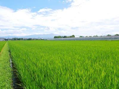 安全で美味しい熊本のお米を紹介!その1:惜しまぬ手間ひまの「七城米 長尾さんちのこだわりのお米」_a0254656_18434576.jpg