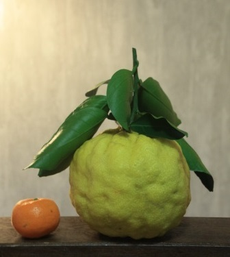 獅子柚子_b0207284_08032110.jpg