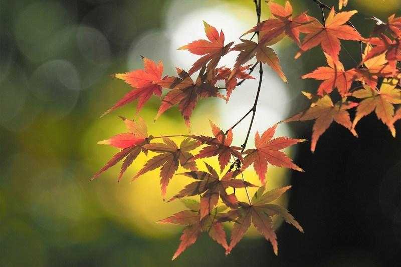 旧古河庭園の紅葉_e0348392_09062508.jpg