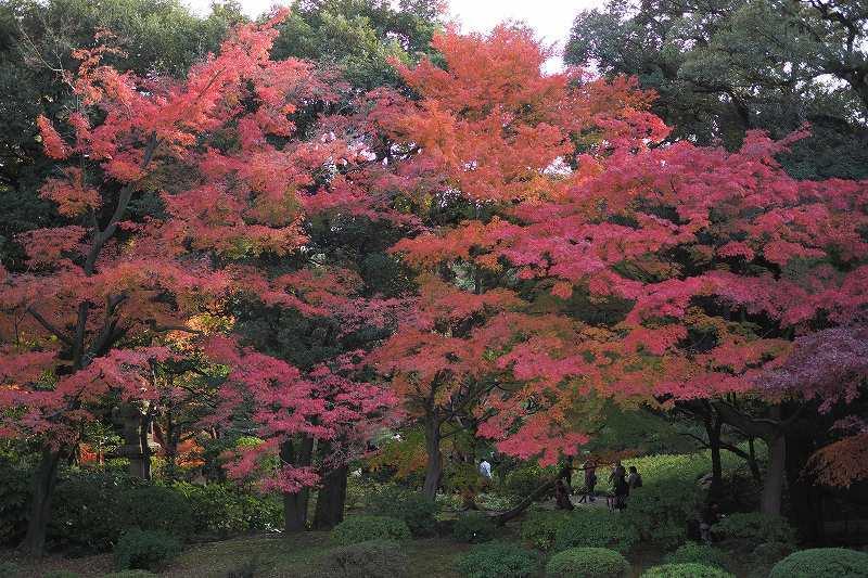 旧古河庭園の紅葉_e0348392_09070121.jpg