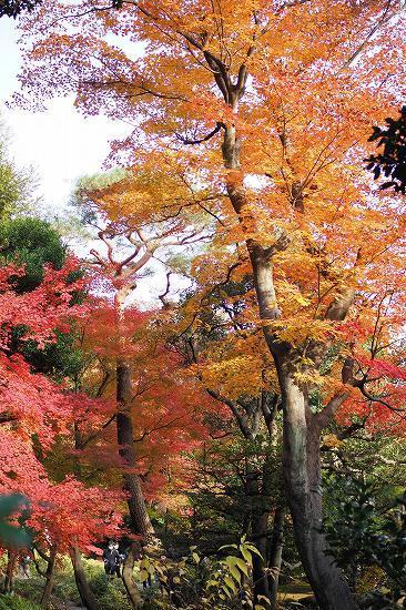 旧古河庭園の紅葉_e0348392_09071194.jpg
