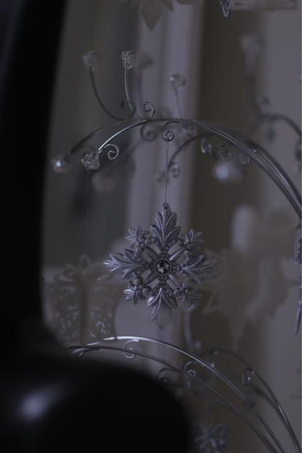 クリスマスツリー登場_e0059896_12385960.jpg
