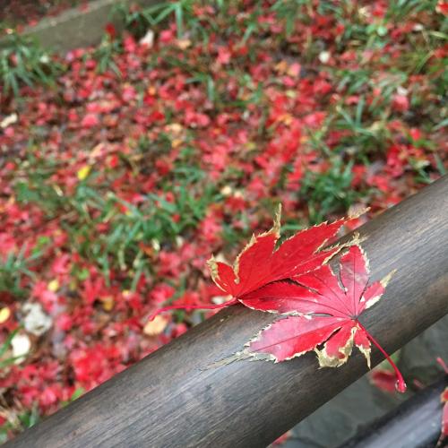 雨上がりの紅葉がそれはそれは綺麗でした。_b0105897_21463768.jpg