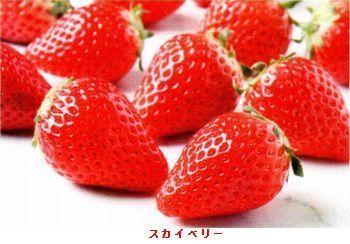 栃木・スカイベリー_b0044404_15483750.jpg
