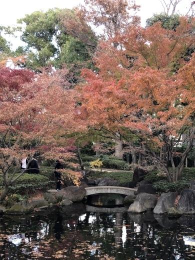紅葉真っ盛りです_d0286718_07513998.jpeg