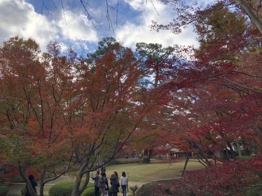 紅葉真っ盛りです_d0286718_07533106.jpeg