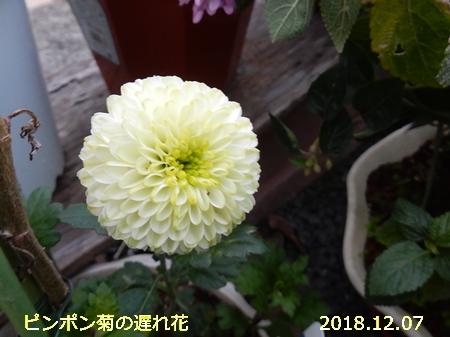 e0033229_1826068.jpg