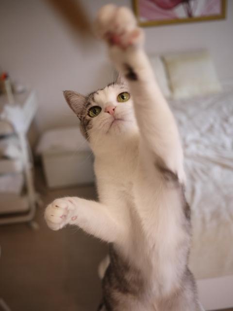 猫のお留守番 ムーくん編。_a0143140_22560172.jpg