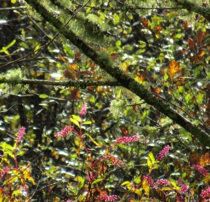 秋の記憶 …… 。_b0287748_15370619.jpg