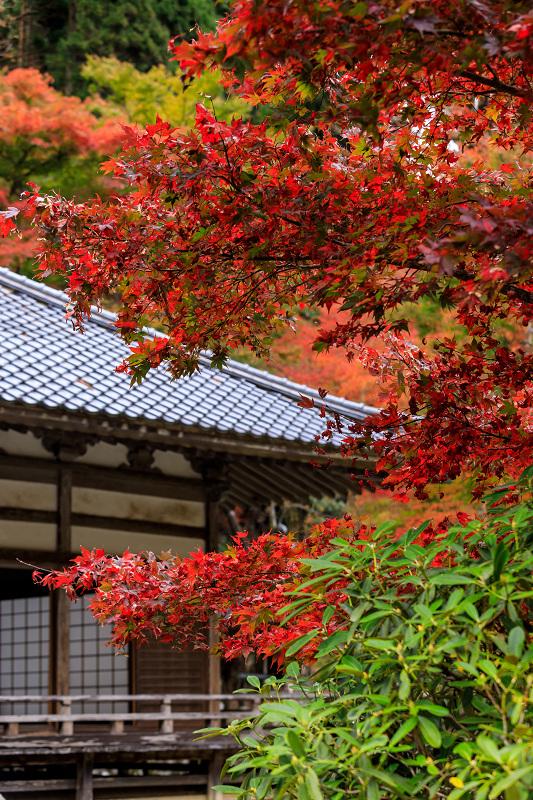 京の紅葉2018 山寺の彩り(古知谷阿弥陀寺)_f0155048_918429.jpg