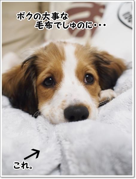 d0013149_01150844.jpg