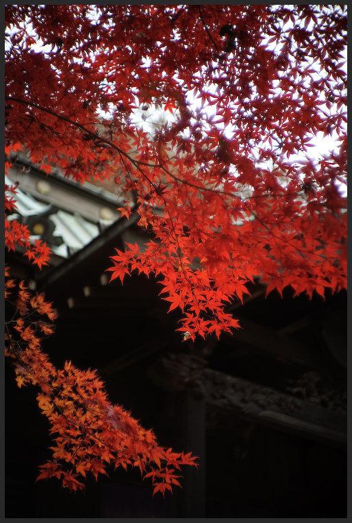 平林寺 -6_b0340572_21234030.jpg