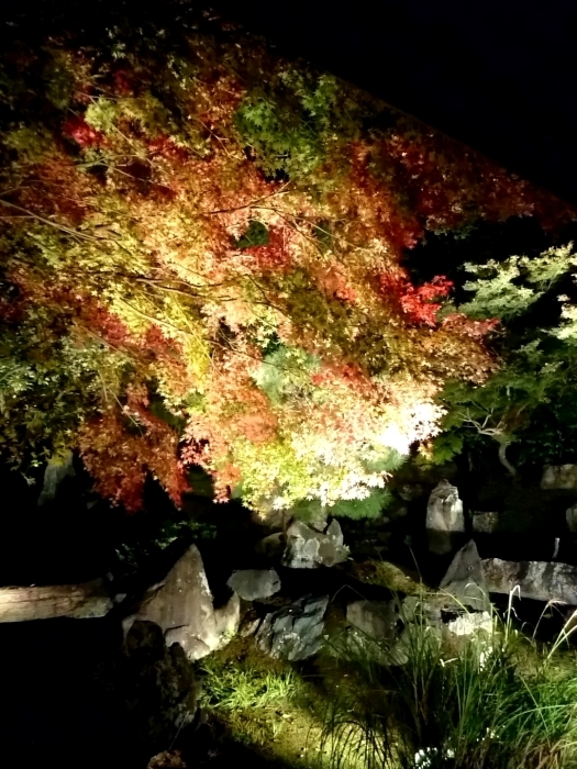 幸せ京都旅 「圓徳院」 幻想的な雰囲気の美しき庭園_c0362623_16541482.jpg