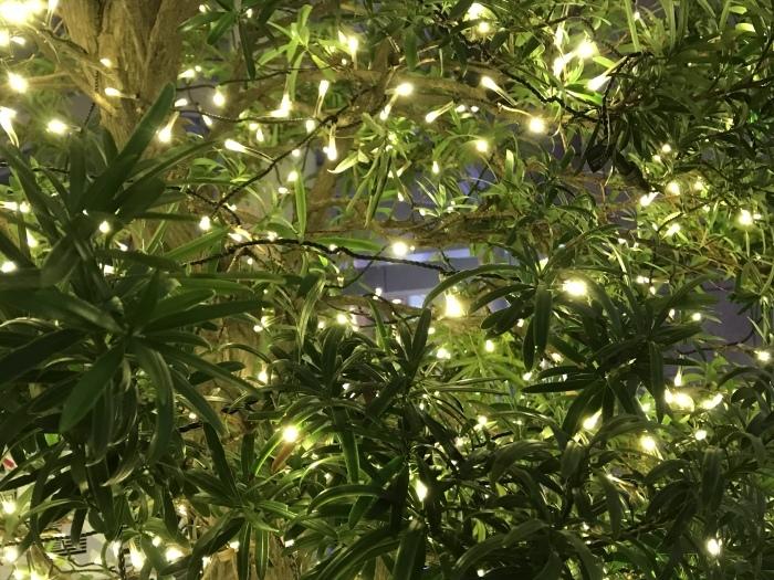 いつかのメリークリスマス 🎶_f0047623_12302240.jpeg