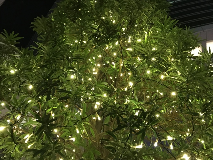 いつかのメリークリスマス 🎶_f0047623_12303937.jpeg