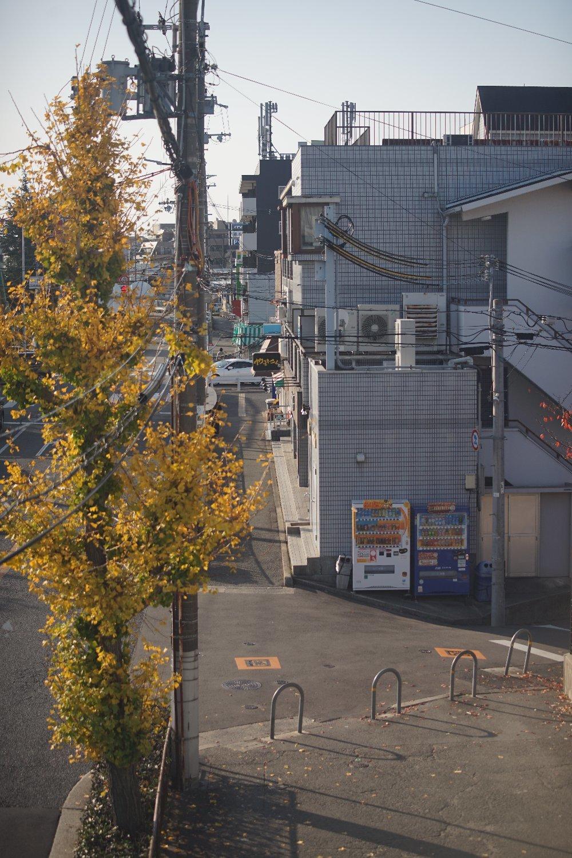 ズームヘキサノンAR 65-135mmF4 で 近所を散歩_b0069128_10264432.jpg