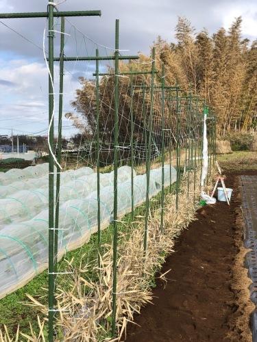 今朝から エンドウ豆のネット張り始めます 飯田一人作業の為途中で時間切れ_c0222448_12233043.jpg