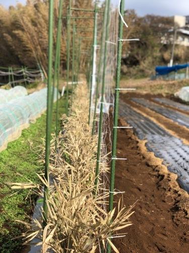 今朝から エンドウ豆のネット張り始めます 飯田一人作業の為途中で時間切れ_c0222448_12234091.jpg