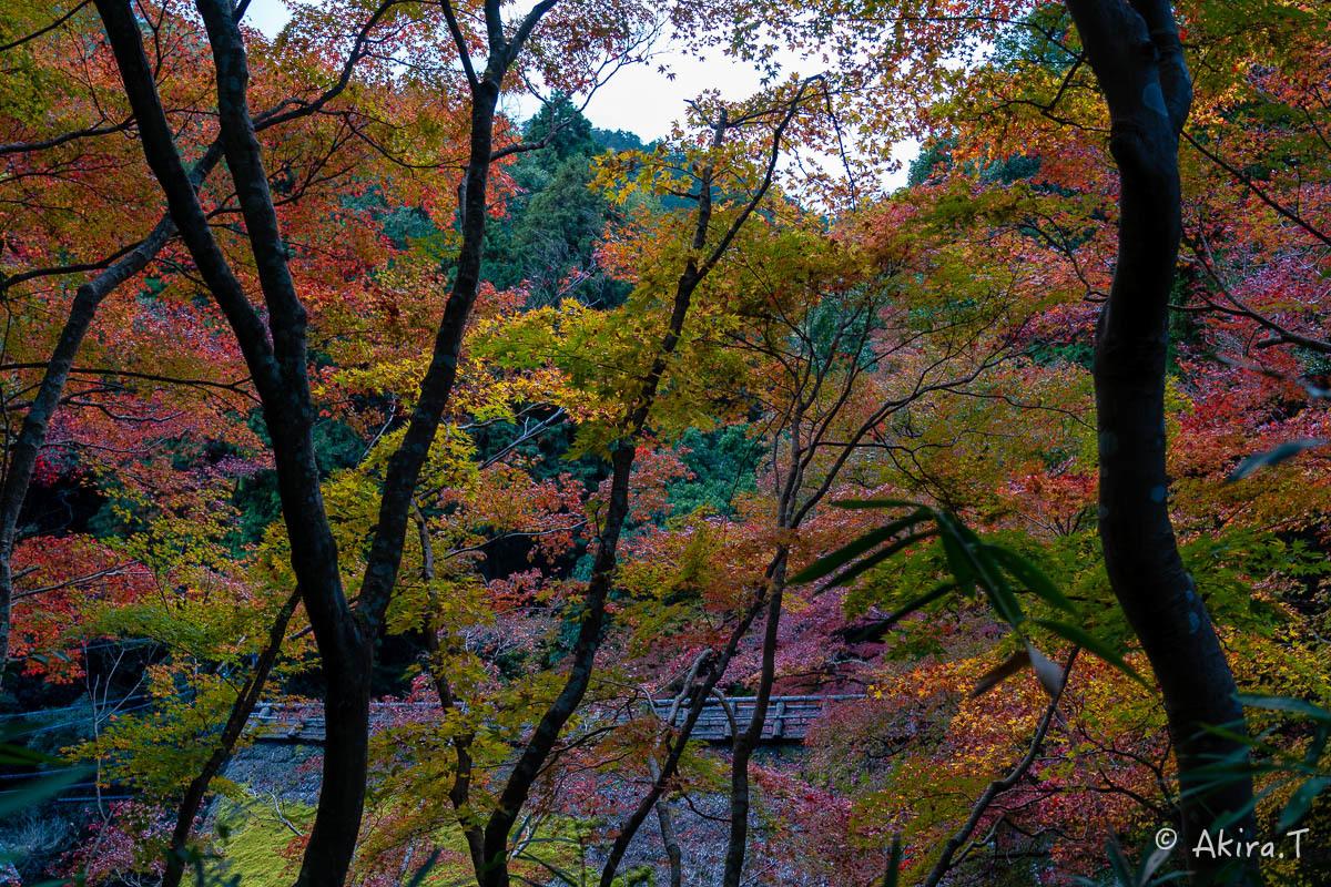 京都の紅葉 2018 〜14〜_f0152550_18000470.jpg