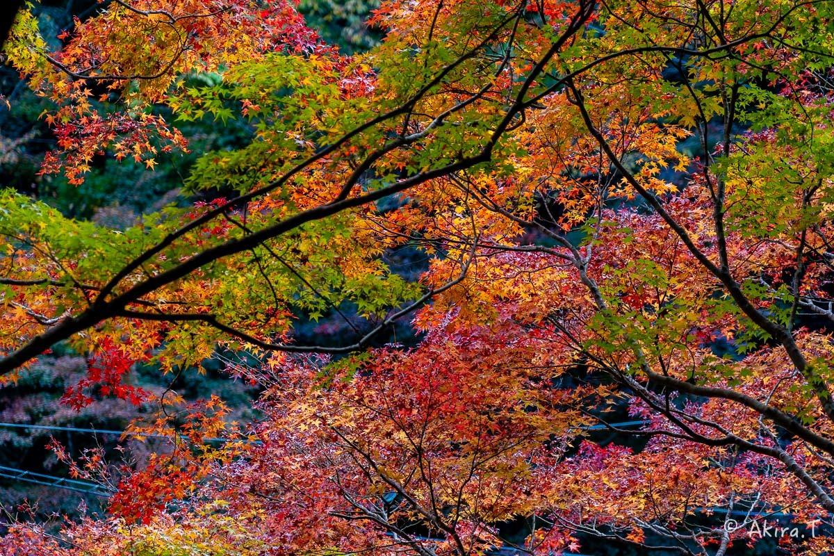 京都の紅葉 2018 〜14〜_f0152550_18002072.jpg