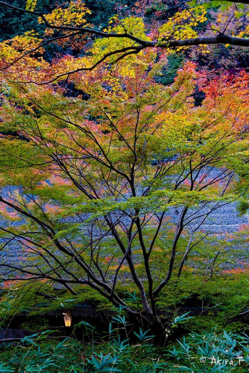 京都の紅葉 2018 〜14〜_f0152550_18002646.jpg