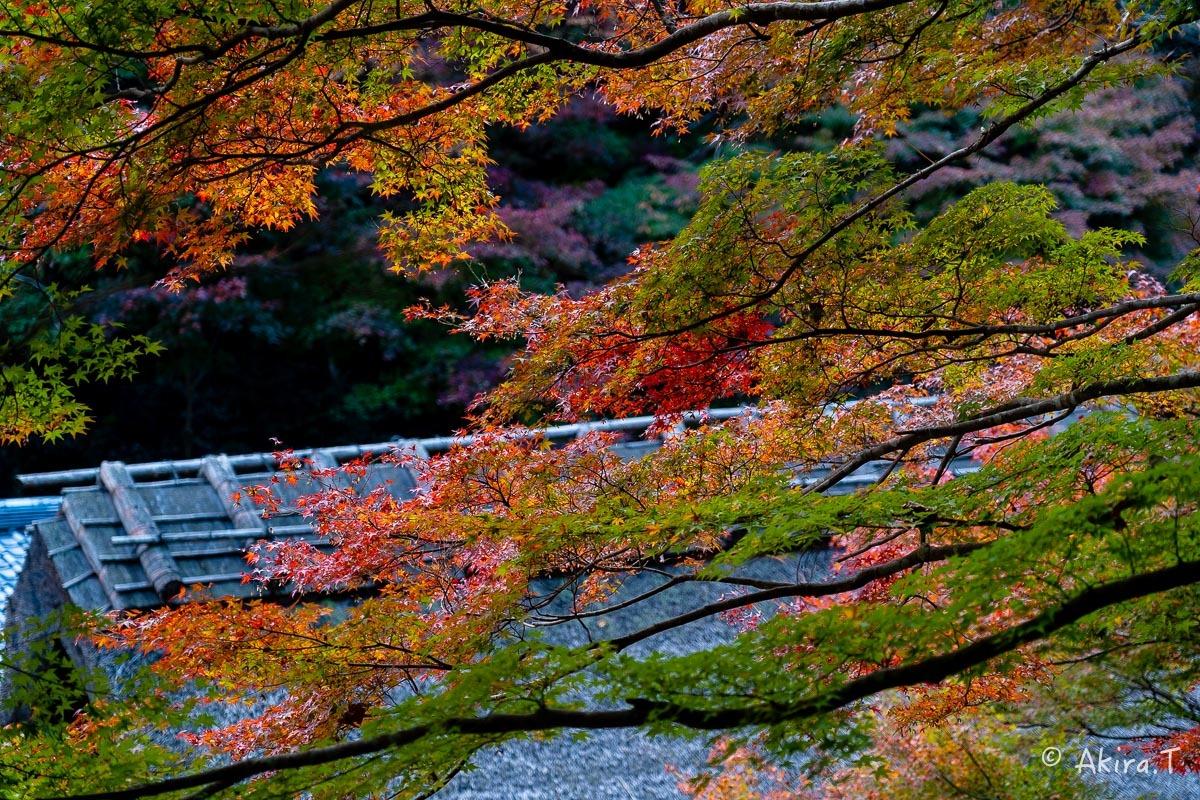 京都の紅葉 2018 〜14〜_f0152550_18013092.jpg