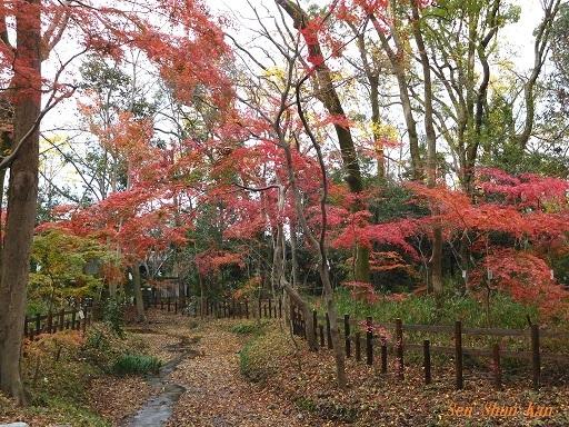 下鴨神社の紅葉  2018年12月7日_a0164068_23524955.jpg