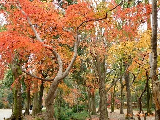 下鴨神社の紅葉  2018年12月7日_a0164068_23524970.jpg