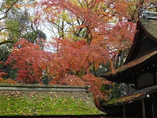 下鴨神社の紅葉  2018年12月7日_a0164068_23525096.jpg