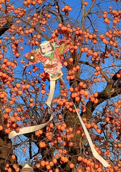 """快晴の青空に映える """"鈴なりの柿と奴凧"""" そのⅠ_a0140608_18274725.jpg"""