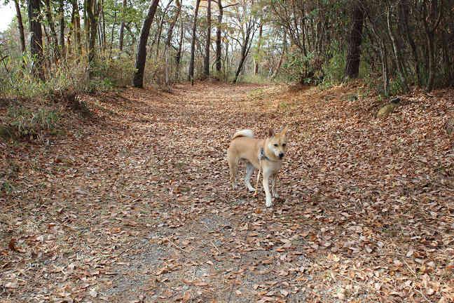三木山森林公園へ_e0371017_22351996.jpg