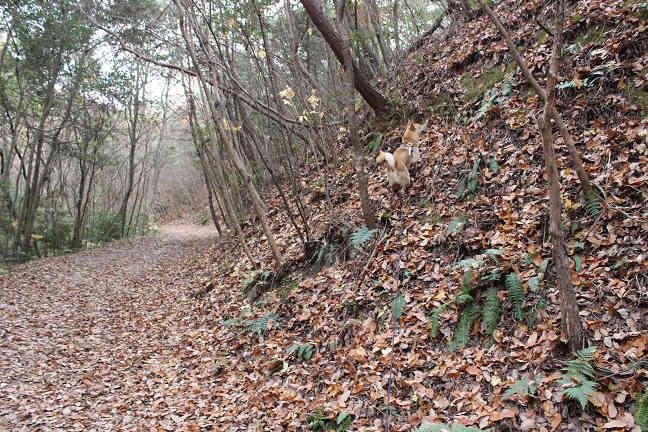 三木山森林公園へ_e0371017_22380855.jpg
