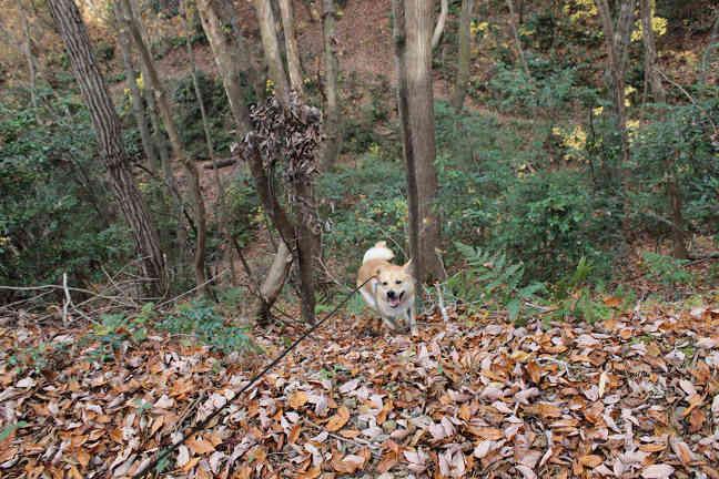 三木山森林公園へ_e0371017_22435601.jpg