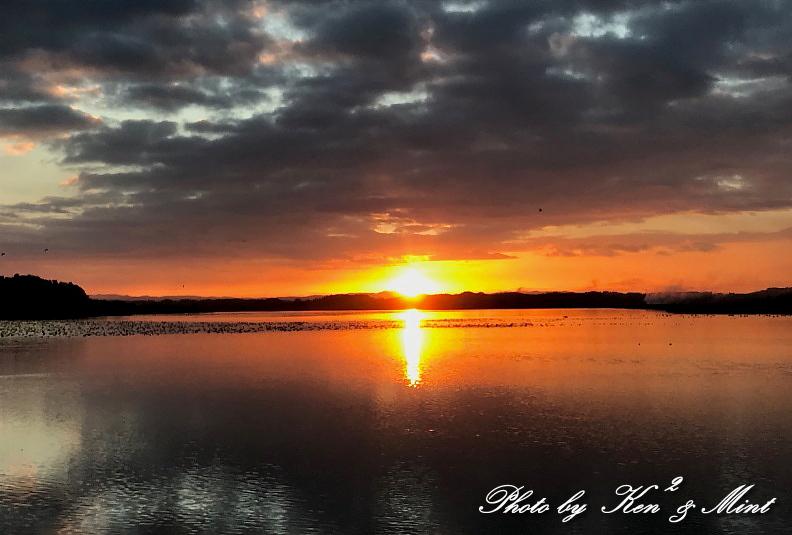 伊豆沼の朝日「塒立ち」♪ 感動しました(*^^*) そして・・沢山の鳥さん達♪_e0218518_16501834.jpg