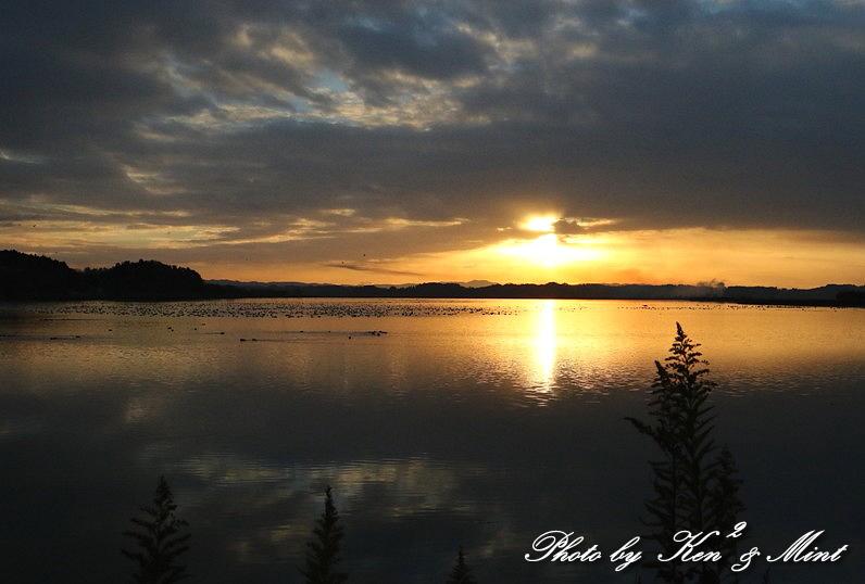 伊豆沼の朝日「塒立ち」♪ 感動しました(*^^*) そして・・沢山の鳥さん達♪_e0218518_18375166.jpg