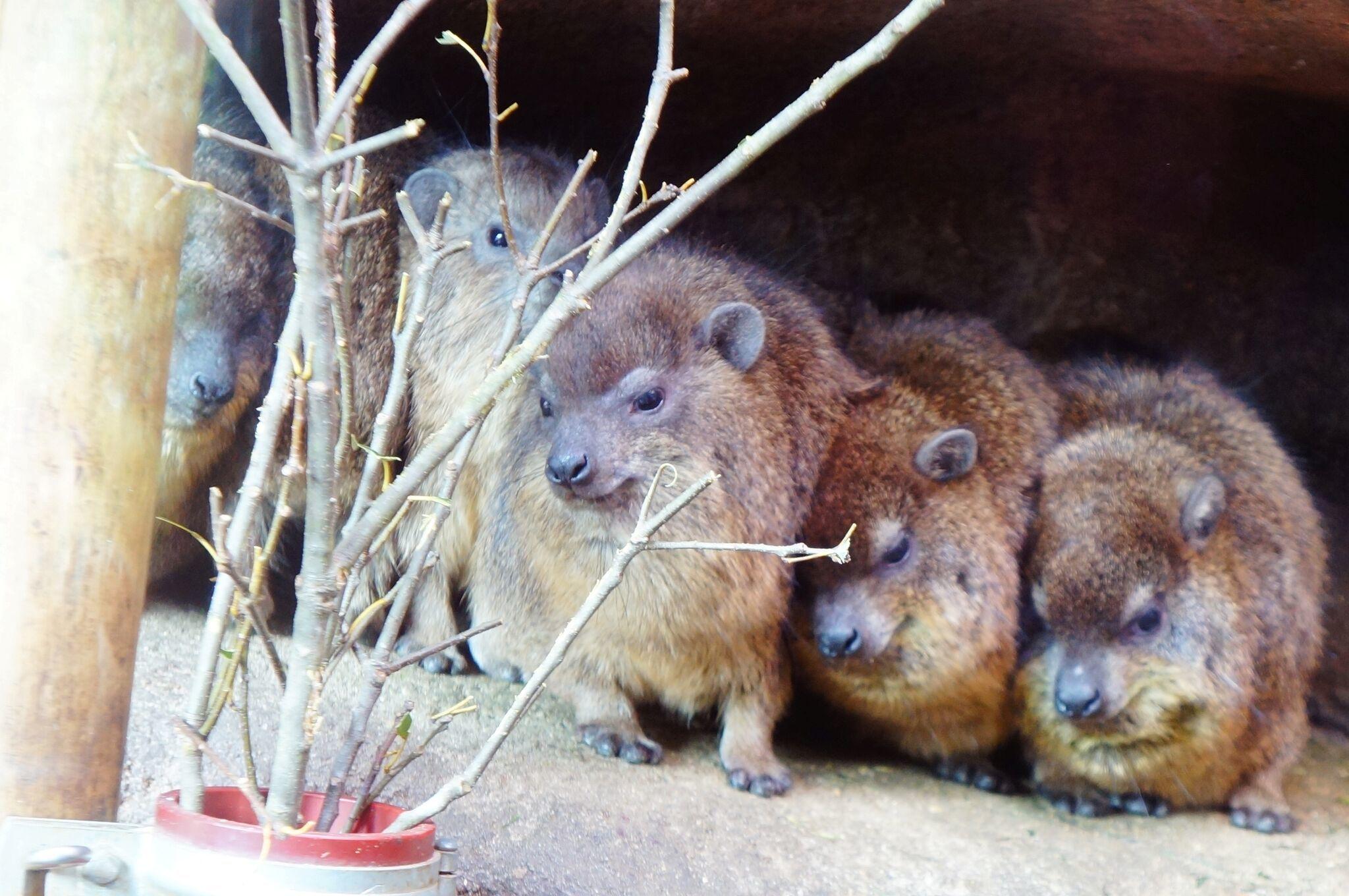 日曜朝教室(12月9日)🐘 天王寺動物園 🐧_e0175020_22341388.jpg